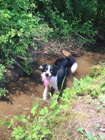 creek fun
