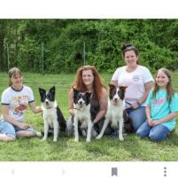 Clover pups