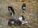 Barley, Rocco, and Kip