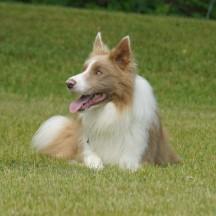 Our Dogs - Bairdcreek's Sagehill Underworld Rising