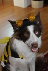 Copper the bee