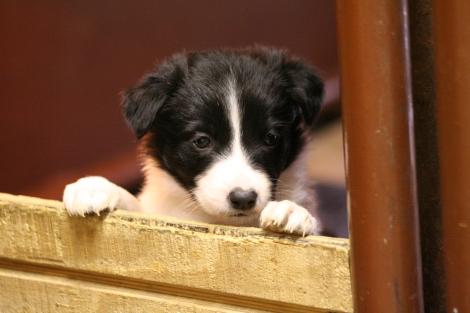 Puppy (Gallery)