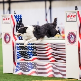 Sequel at the 2016 Mid-Atlantic Agility Showcase