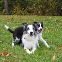 Our Dogs - QL Mat 8 AND BWBC Loop