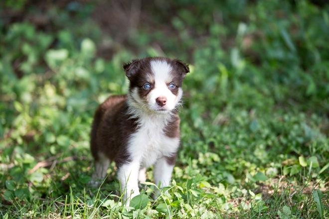 puppies_14