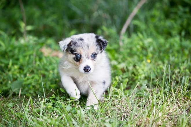 puppies_7