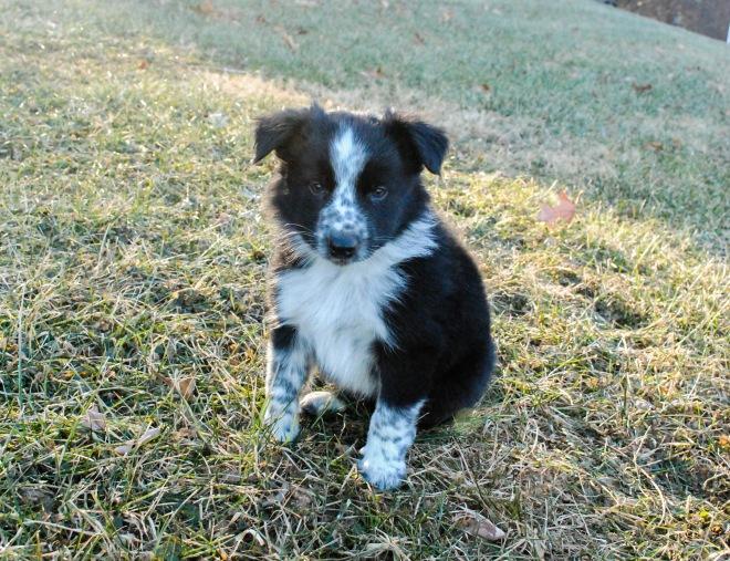 star pup 3