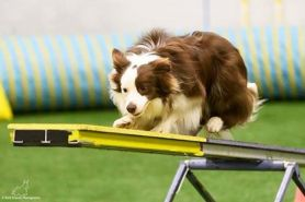 Gallery - Branchwater Trained Dogs - Kody