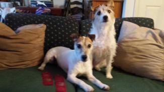 Gallery - Branchwater Trained Dogs - Maisie and Otis