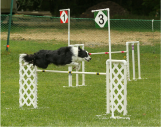 Sequel sailing over the #3 jump in a Snooker course at a Branchwater USDAA trial