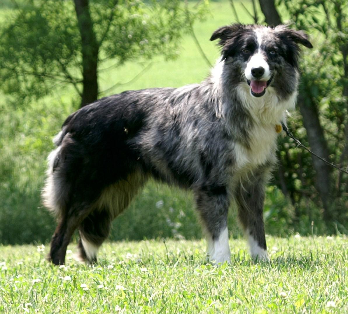 Our Dogs - Bonnie Blue