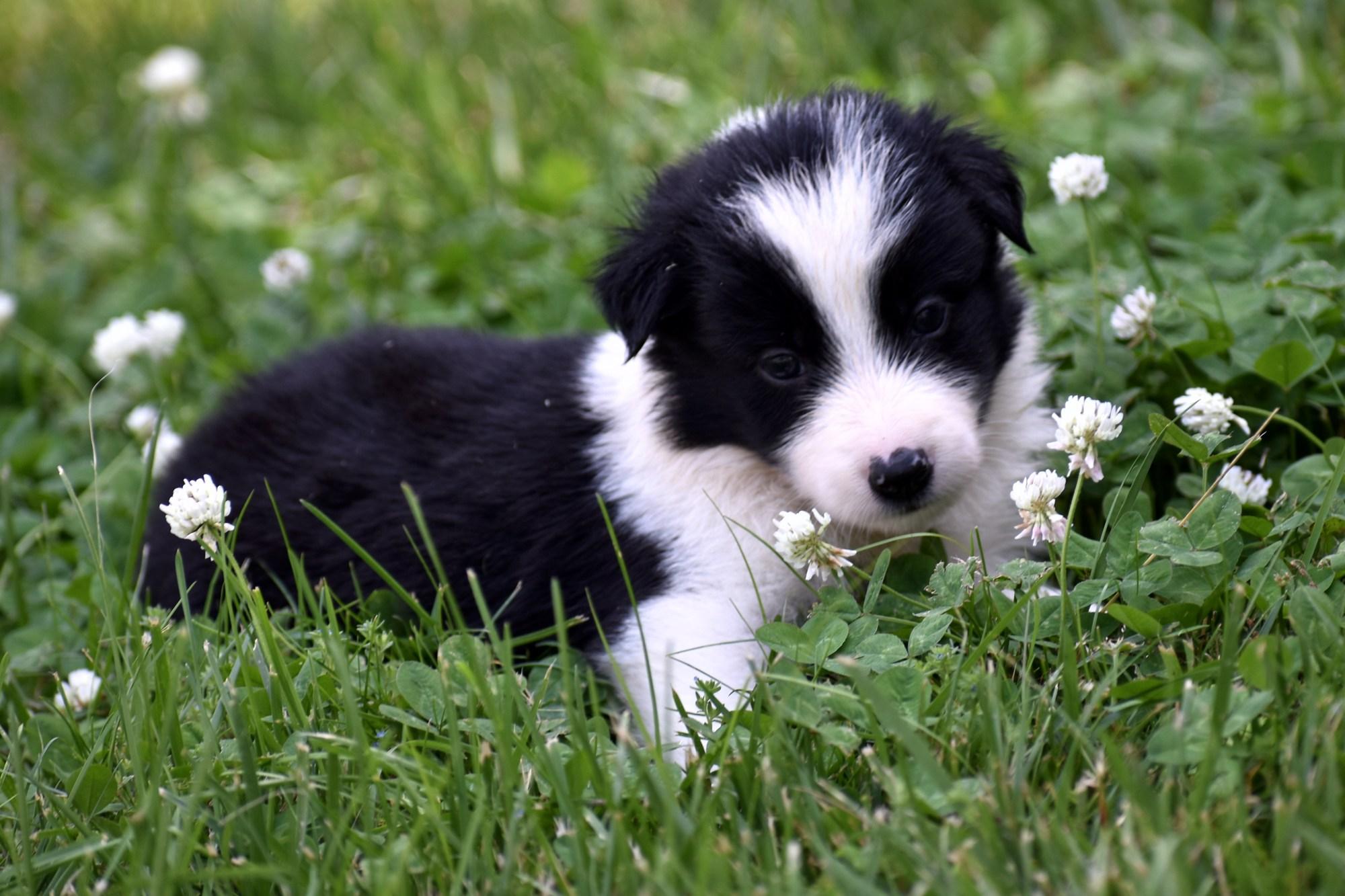Puppies Branchwater